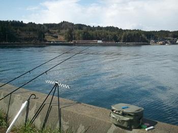 🎣 能登島にカレイ釣り