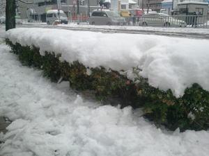 名古屋積雪23センチどえりゃー雪