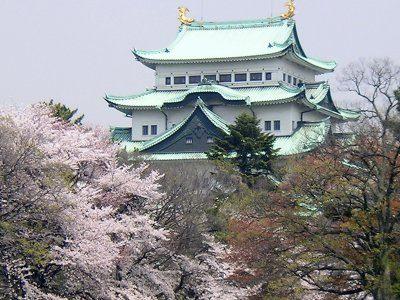 名古屋城の桜🌸
