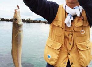大型キス・タイワンガザミが釣れた越前敦賀釣行(9月15日)