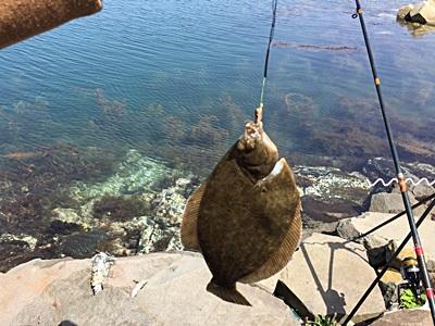 能登島カレイ釣り002