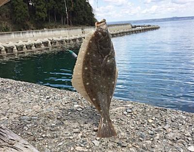 投げ釣りで能登島カレイ釣り2日間で2枚しかいや2枚も釣れた(´~`ヾ)