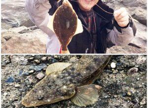 能登島カレイマゴチ魚