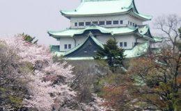 名古屋城桜01