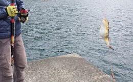 常神半島にカレイキス狙い釣行